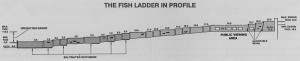 Seattle_fish_ladder_in_profile diagram