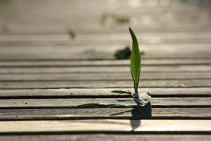 Urban Forestry Brings Greener, Cleaner, Healthier Neighborhoods